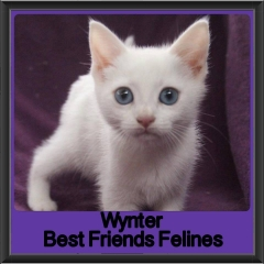 2017 - Adopted - Wynter