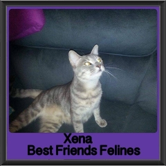 2017 - Adopted - Xena