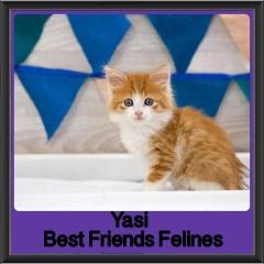 2017 - Adopted - Yasi