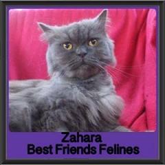 2017 - Adopted - Zahara
