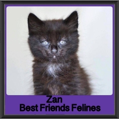 2017 - Adopted - Zan