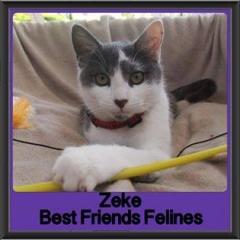2017 - Adopted - Zeke