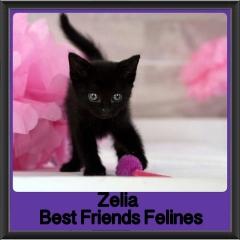 2017 - Adopted - Zelia
