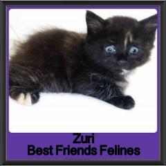 2017 - Adopted - Zuri