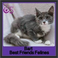 2017 - Adopted - bart