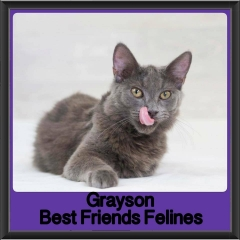 2017 - Adopted - grayson