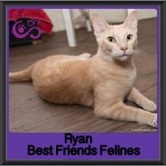 2017 - Adopted - ryan
