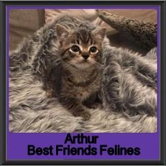 2018-Adopted-Arthur