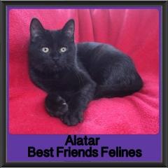 2018 - Alatar