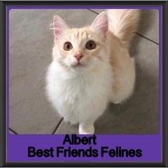 2018 - Albert