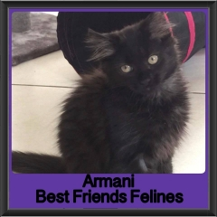 2018 - Armani
