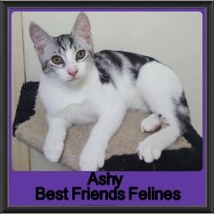 2018 - Ashy