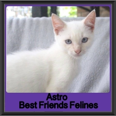 2018 - Astro