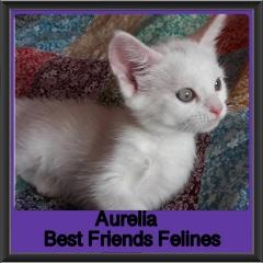 2018 - Aurelia