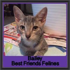 2018 - Bailey