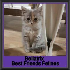 2018 - Bellatrix