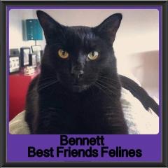 2018 - Bennett