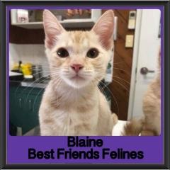 2018 - Blaine