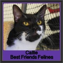 2018 - Callie