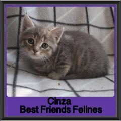 2018 - Cinza