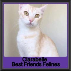 2018 - Clarabelle