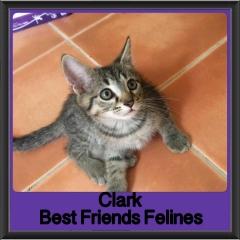 2018 - Clark