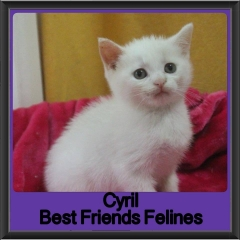2018 - Cyril