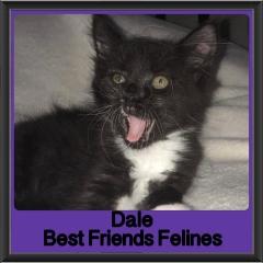 2018 - Dale