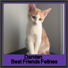 2018 - Damien