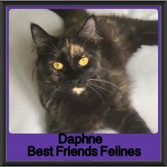 2018 - Daphne