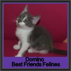 2018 - Domino