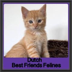 2018 - Dutch