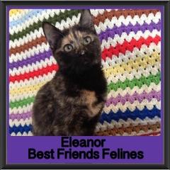 2018 - Eleanor