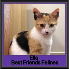 2018 - Ella