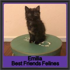 2018 - Emilia