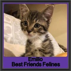 2018 - Emilio