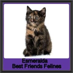 2018 - Esmeralda
