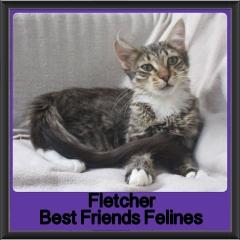 2018 - Fletcher