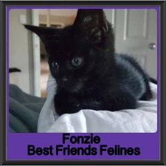 2018 - Fonzie