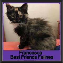 2018 - Francesca