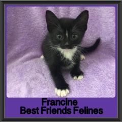 2018 - Francine