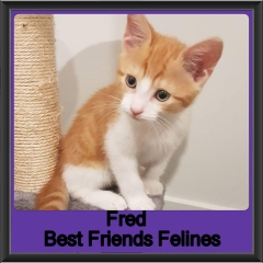 2018 - Fred
