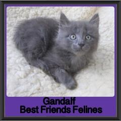 2018 - Gandalf