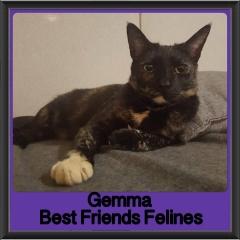 2018 - Gemma