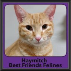 2018 - Haymitch