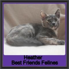 2018 - Heather