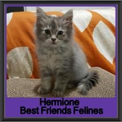 2018 - Hermione