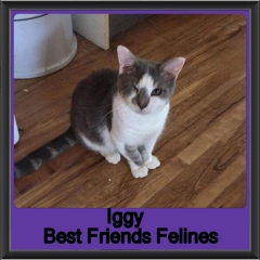2018 - Iggy