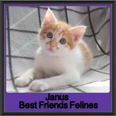 2018 - Janus