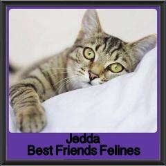 2018 - Jedda